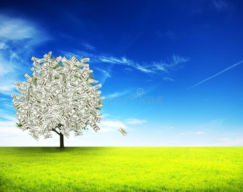 Расти дерева денег стоковое изображение rf