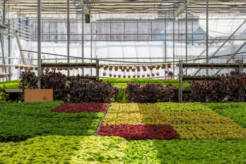 Расти орнаментальных заводов, кустарников и цветков для садовничать в современном hydroponic парнике с системой контроля климата стоковое фото