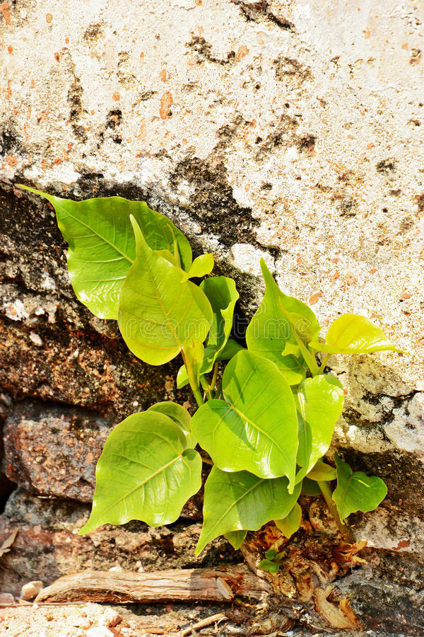 Download Расти ростка стоковое фото. изображение насчитывающей green - 37929680