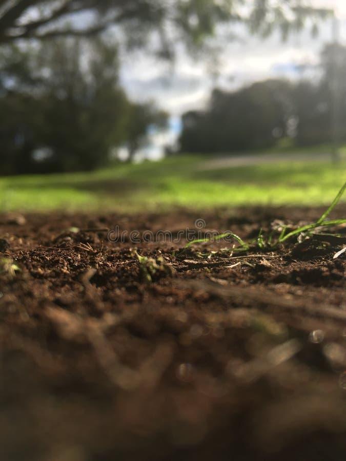 расти стоковое фото