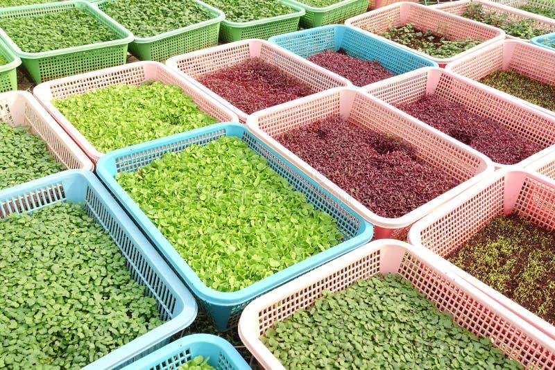 Растущие органические vegetable фермы стоковое изображение