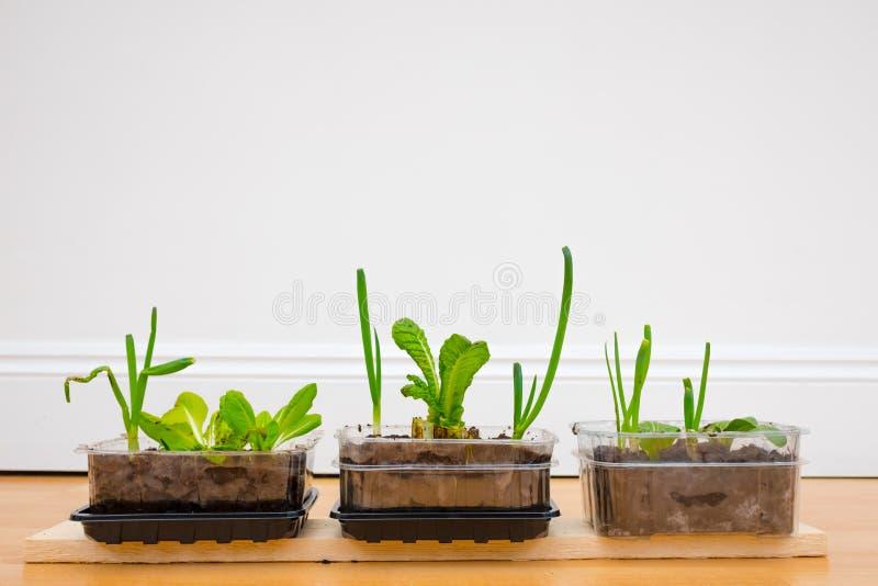 Растущие травы и овощ дома стоковые фото