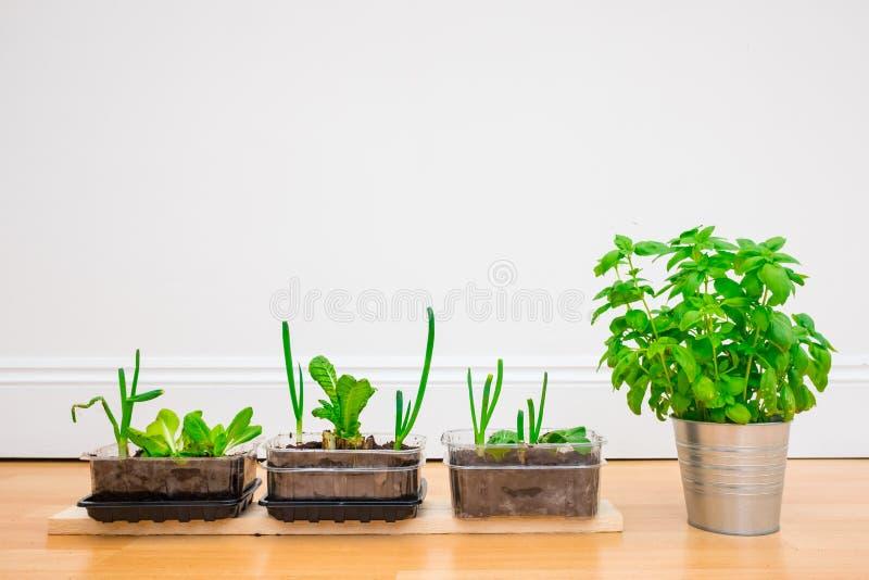 Растущие травы и овощ дома стоковые фотографии rf