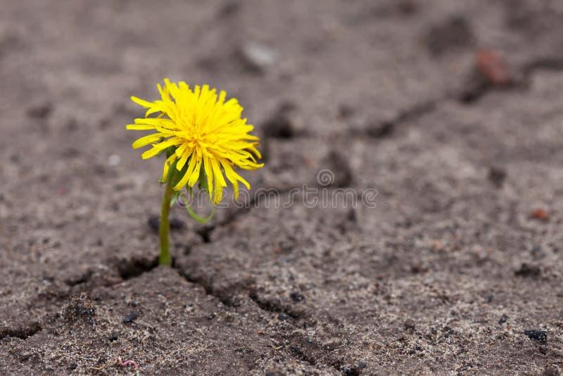 «Сонник Цветок приснился, к чему снится во сне Цветок»
