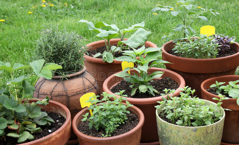 Растущий овощ, травы и ароматичные заводы в декоративных баках стоковое изображение rf