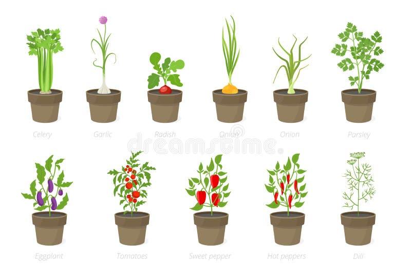 Растя овощи в баке Установите в горшке завода Домашний сад Томат, рост перца лука E бесплатная иллюстрация