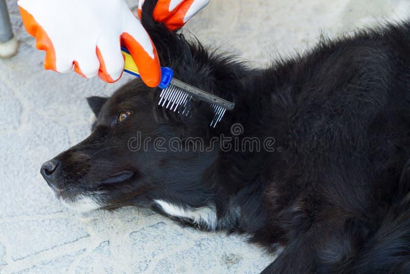 расчесывать шерсти собаки стоковая фотография