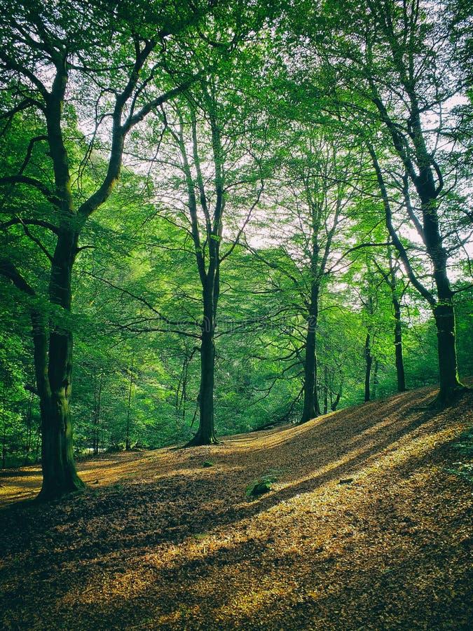 Расчистка леса в склоняя холмистом полесье стоковое фото