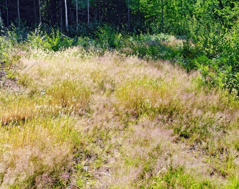 Расчистка леса с травами стоковая фотография