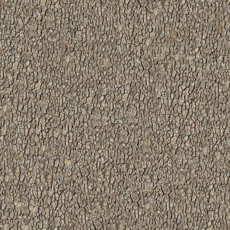 Расшива вяза. Безшовная текстура Tileable. стоковое фото