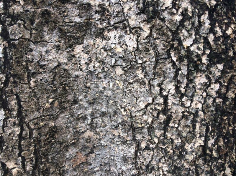 Расшива дерева черна стоковое фото rf