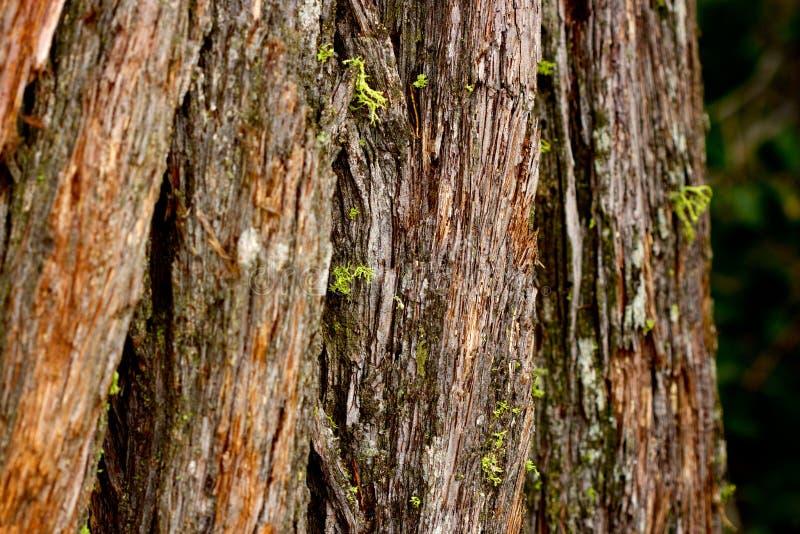 Расшива дерева с мхом стоковые фото