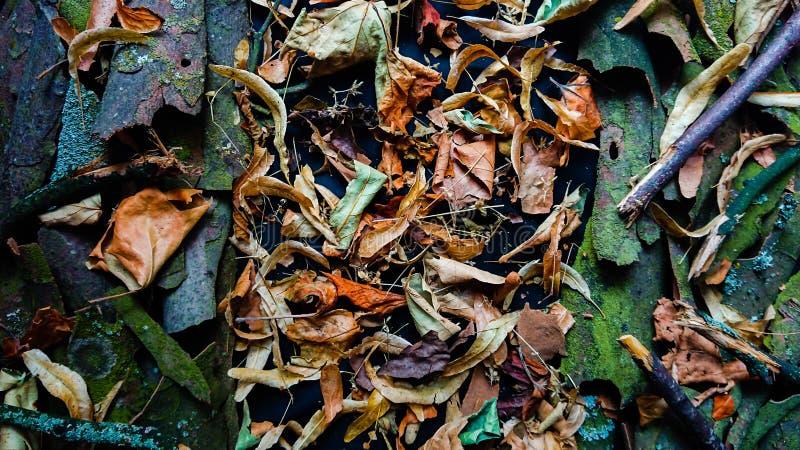 Расшива и листья предпосылки природы стоковые изображения rf