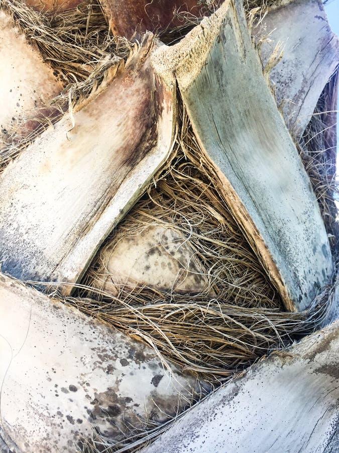 Расшива пальмы стоковая фотография