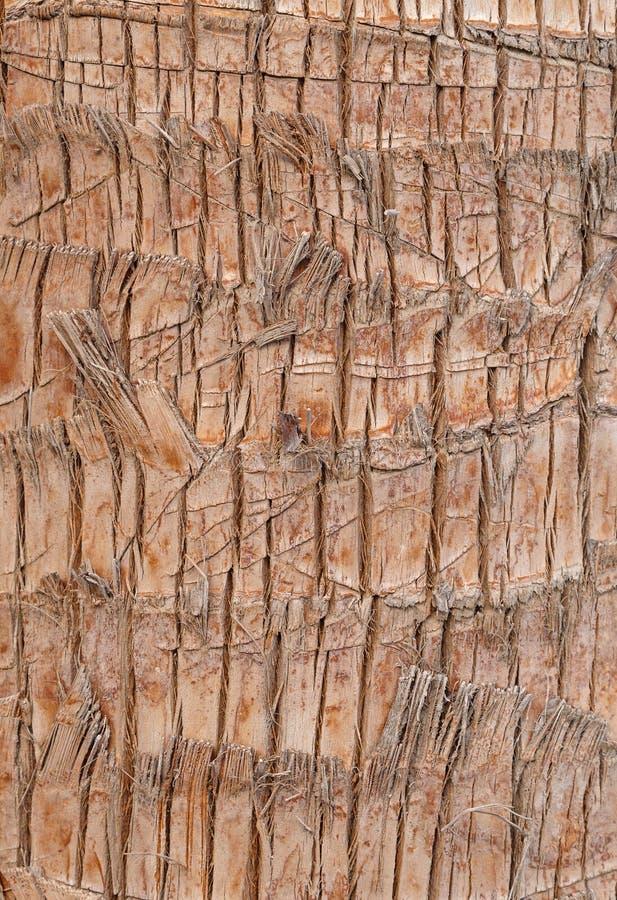 Расшива пальмы стоковые изображения