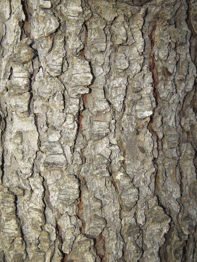 Расшива сосны стоковое фото