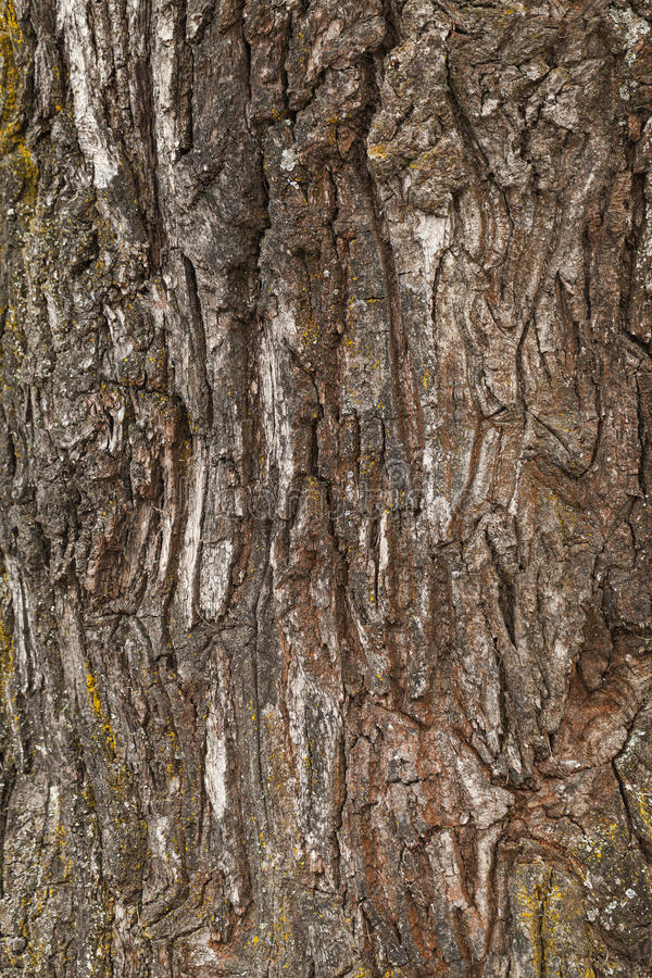 Расшива старого дерева грубая, естественная текстура стоковые фото