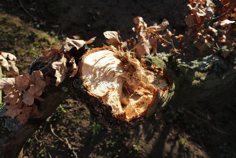 расщепленная древесина стоковые фотографии rf
