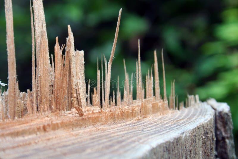 расщепленная древесина стоковое фото