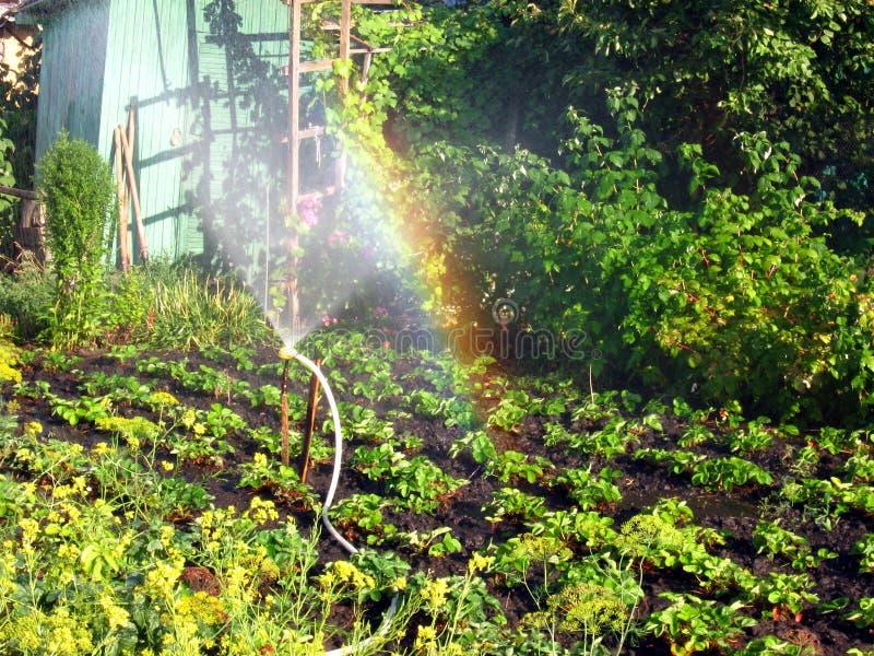 Радуга в солнечном вертепе, в саде стоковые фото