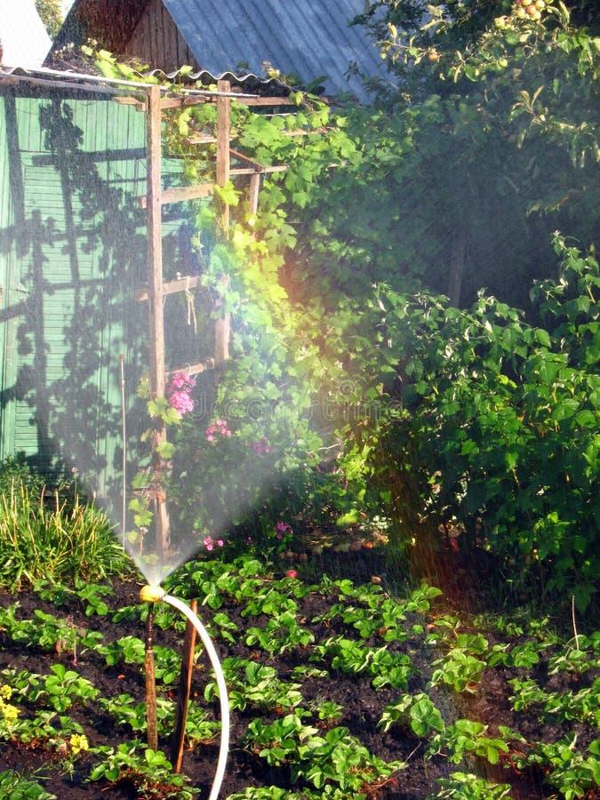 Радуга в солнечном вертепе, в саде стоковая фотография rf