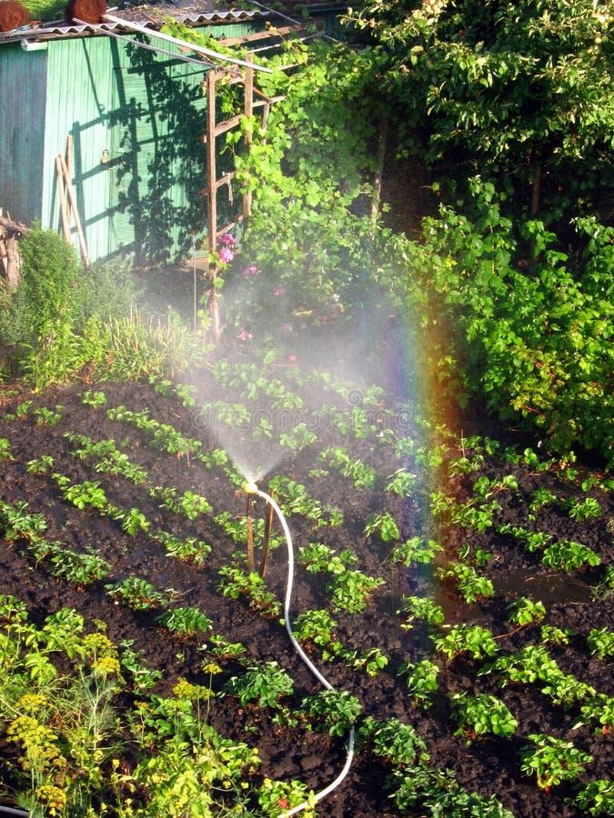Радуга в солнечном вертепе, в саде стоковые фотографии rf