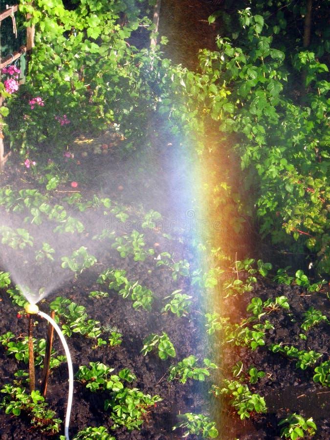 Радуга в солнечном вертепе, в саде стоковые изображения