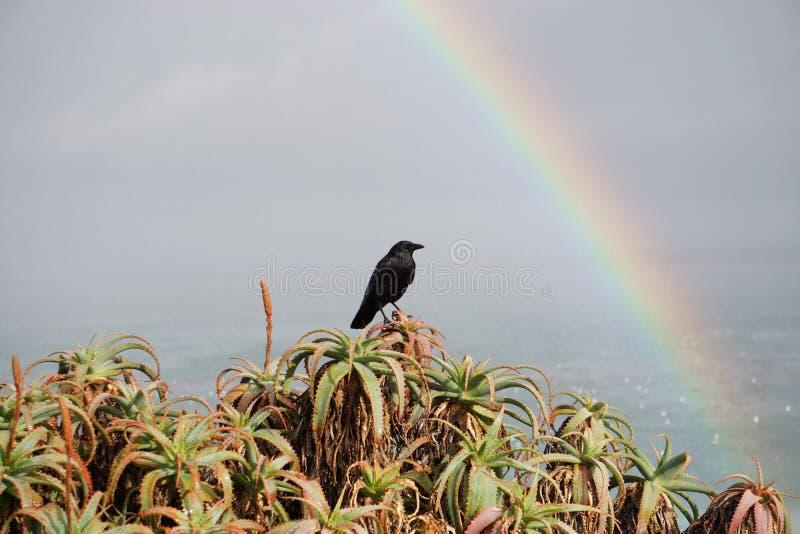 Радуга и ворона над океаном стоковые изображения