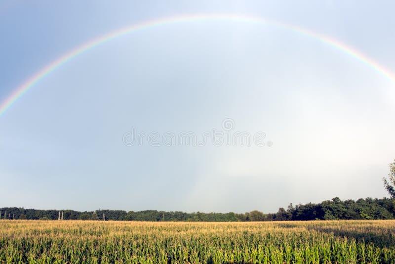 Радуга над кукурузным полем в лете после дождя стоковое фото