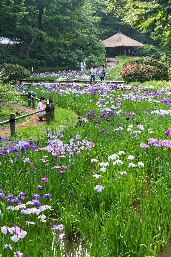 Радужки в святыне Meiji в токио стоковая фотография