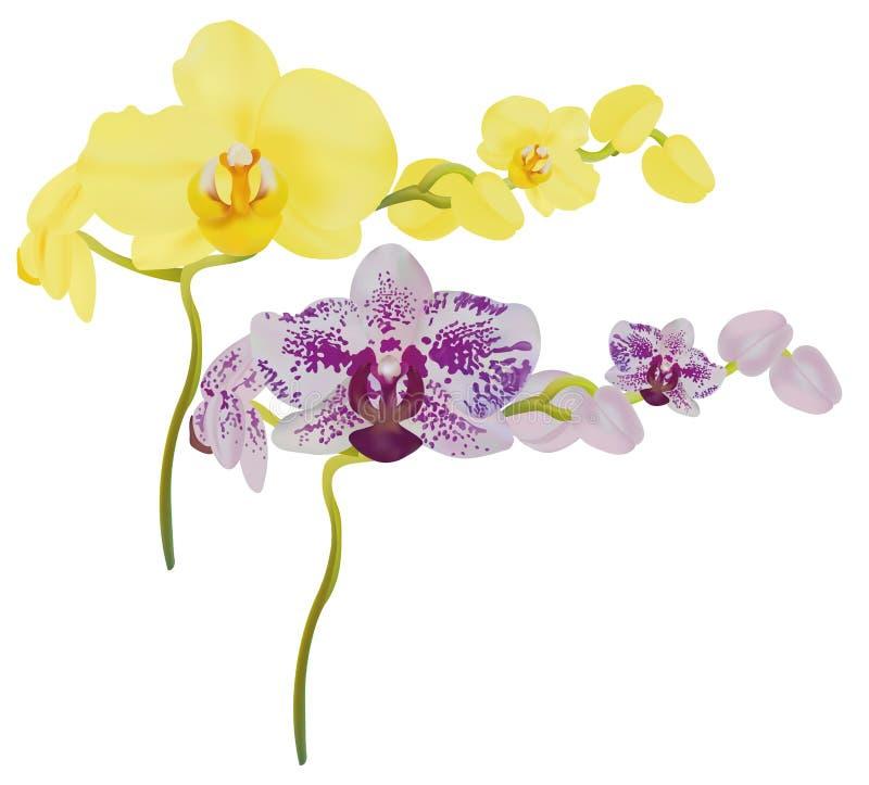реалистическая орхидея 3d на изолированной белой предпосылке Установленный цветок орхидеи Конец орхидеи вверх Иллюстратор вектора иллюстрация штока