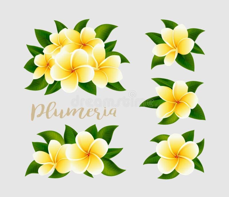 Реалистические белые желтые цветки frangipani plumeria с зелеными изолированными листьями иллюстрация штока
