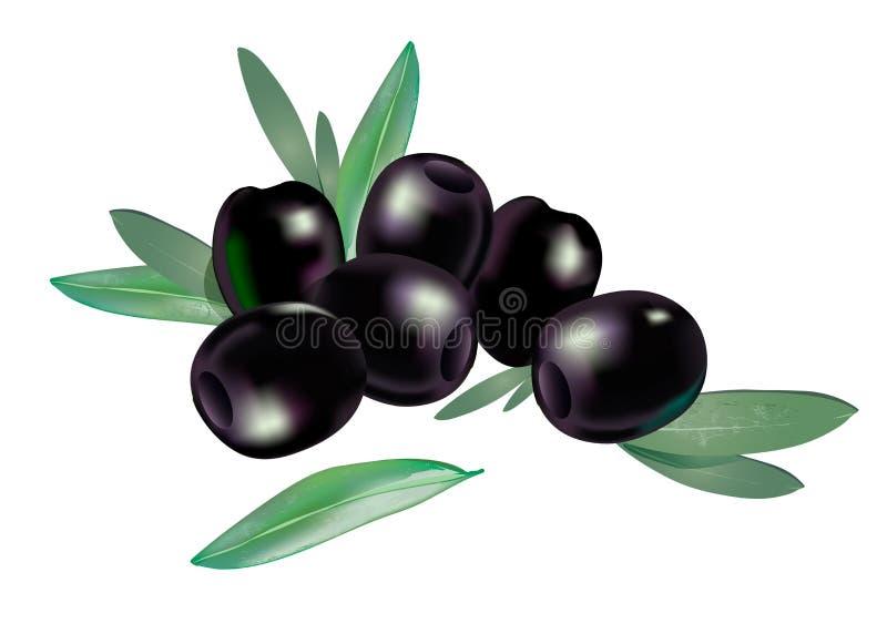 Реалистические бескостные черные оливки 3d при состав немногих листьев изолированный на белизне иллюстрация штока