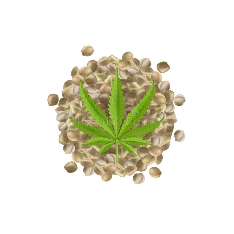 Реалистические семена пеньки с лист Пук марихуаны также вектор иллюстрации притяжки corel иллюстрация вектора