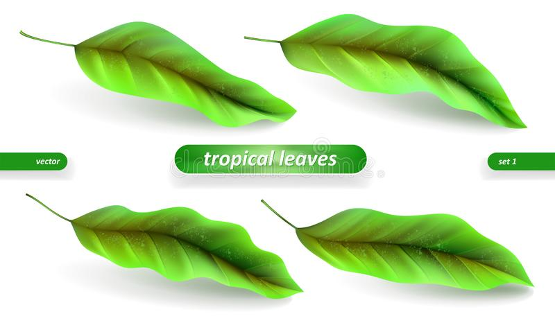 Реалистические тропические листья, набор лист изолированный на белой предпосылке Иллюстрации вектора, флористические элементы иллюстрация вектора