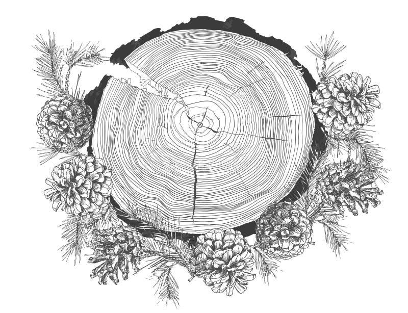 Реалистический ботанический эскиз чернил ветвей ели при конус сосны и хобот годичных колец дерева изолированные на белизне иллюстрация штока
