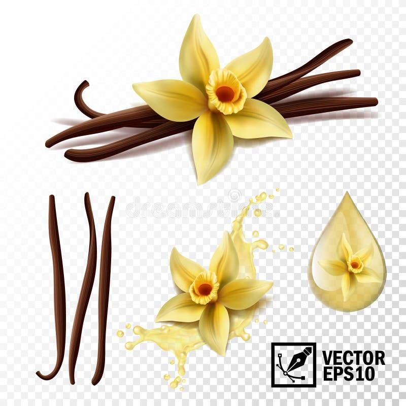 Реалистический комплект вектора элементов: ванильный цветок и стручки или ручки, ванильный выплеск и падения иллюстрация штока