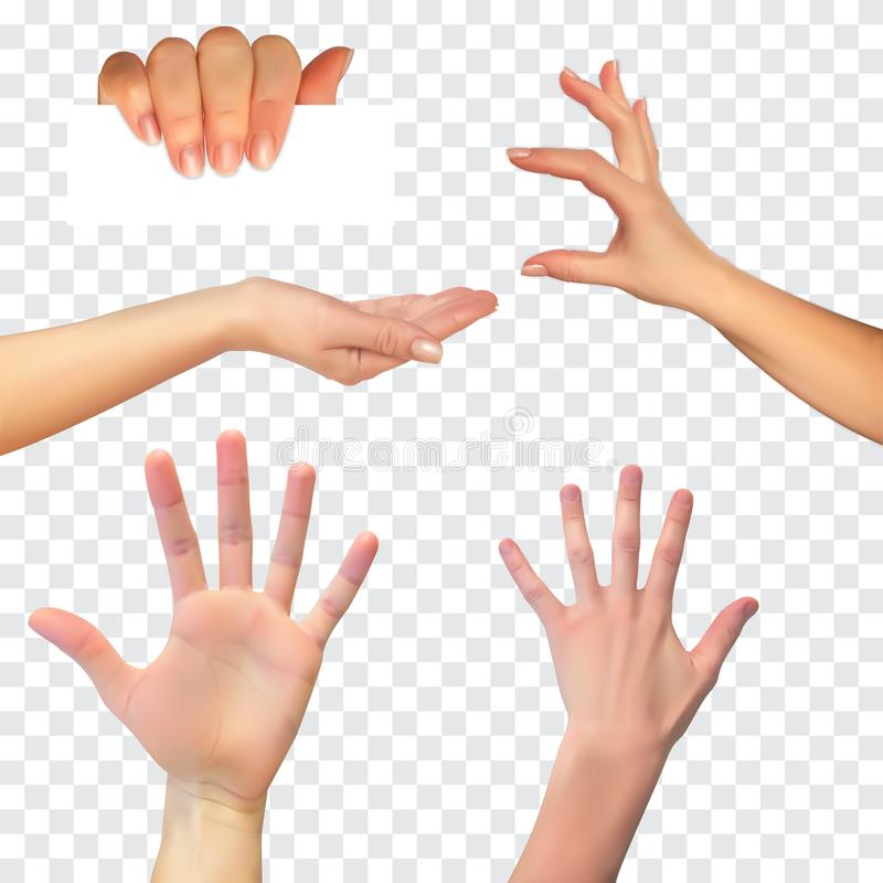 Реалистический силуэт 3D руки на белой предпосылке также вектор иллюстрации притяжки corel бесплатная иллюстрация