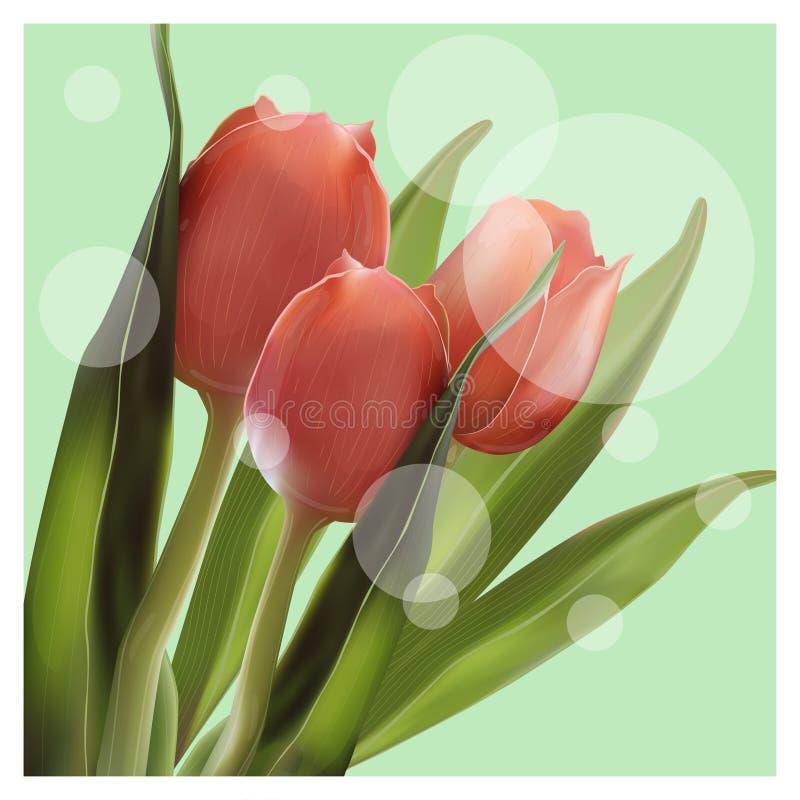 Реалистический тюльпан цветка Тюльпан в векторе eps 10 бесплатная иллюстрация