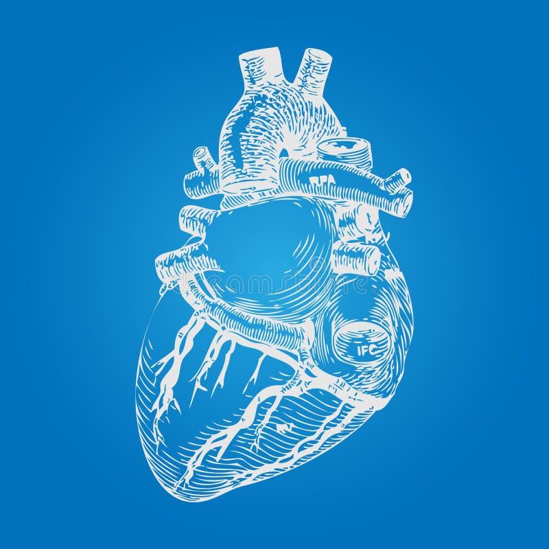 Реалистический человеческий эскиз сердца Стиль нарисованный рукой вектор бесплатная иллюстрация