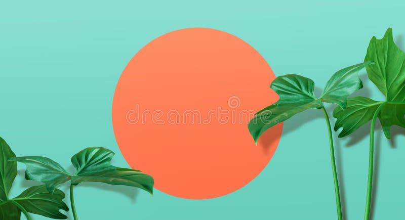 Реальные тропические листья на предпосылке пастельного цвета лето seashells песка рамки принципиальной схемы предпосылки стоковое фото rf