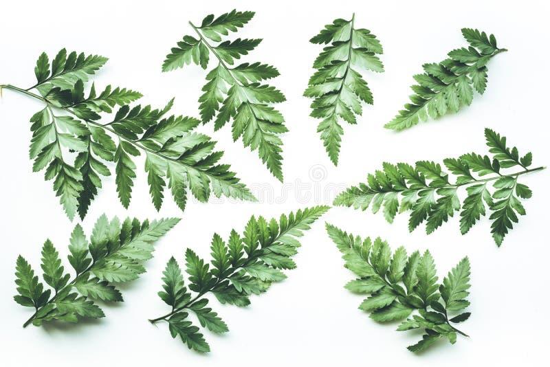 Реальные тропические предпосылки листьев на белизне Ботаническая концепция природы стоковые изображения