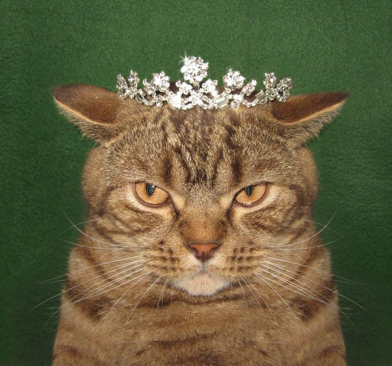 Реальный король кота стоковая фотография rf