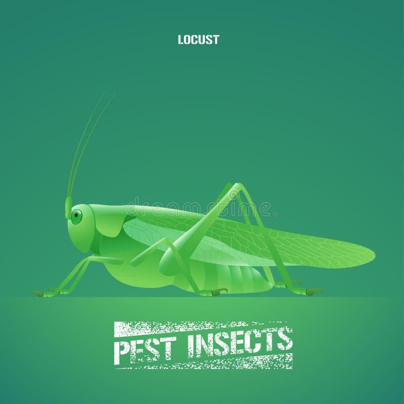 Реалистическая иллюстрация вектора зеленого Acrididae насекомого, саранчи, кузнечика бесплатная иллюстрация