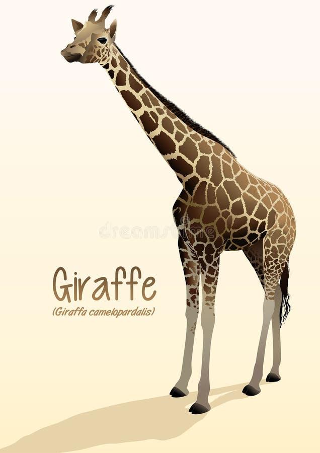 Реалистическая иллюстрация жирафа стоя с тенью иллюстрация штока