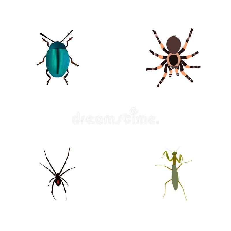Реалистическая черепашка, тарантул, кузнечик и другие элементы вектора Комплект символов насекомого реалистических также включает иллюстрация вектора