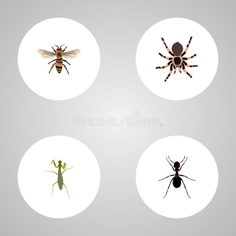 Реалистический кузнечик, тарантул, оса и другие элементы вектора Комплект символов черепашки реалистических также включает Pismir иллюстрация штока