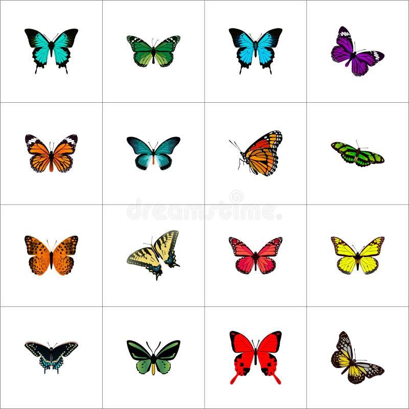 Реалистический монарх, бабочка, тропическая сумеречница и другие элементы вектора Комплект символов сумеречницы реалистических та бесплатная иллюстрация