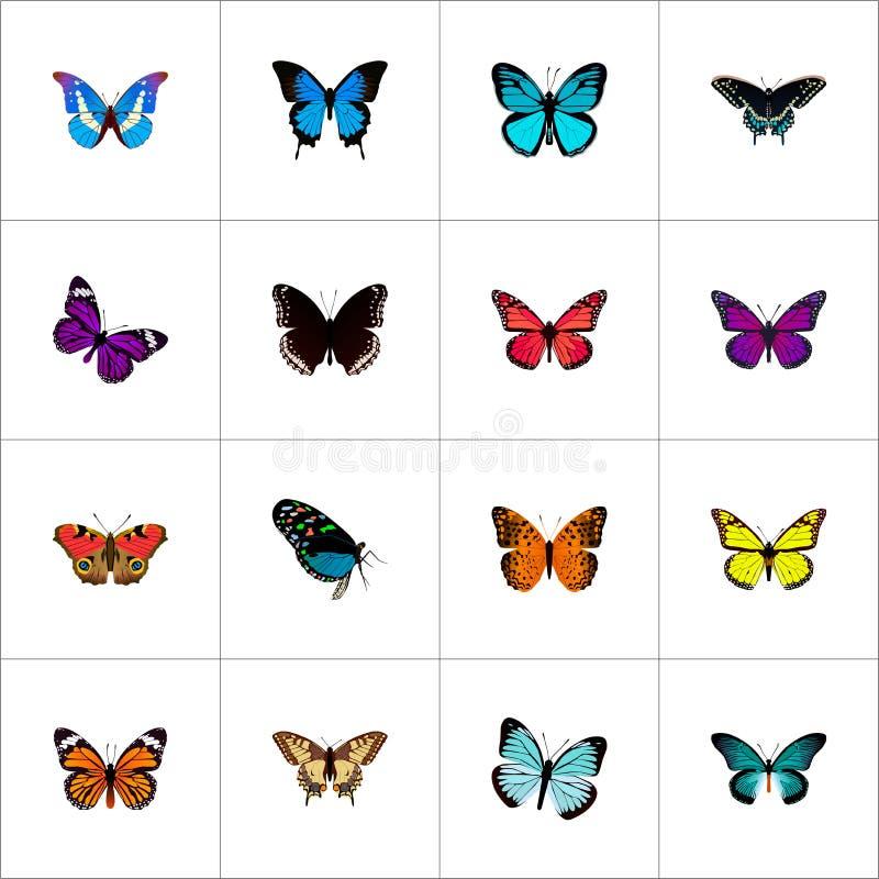 Реалистический монарх, Spicebush, бабочка и другие элементы вектора Комплект символов красоты реалистических также включает пинк бесплатная иллюстрация