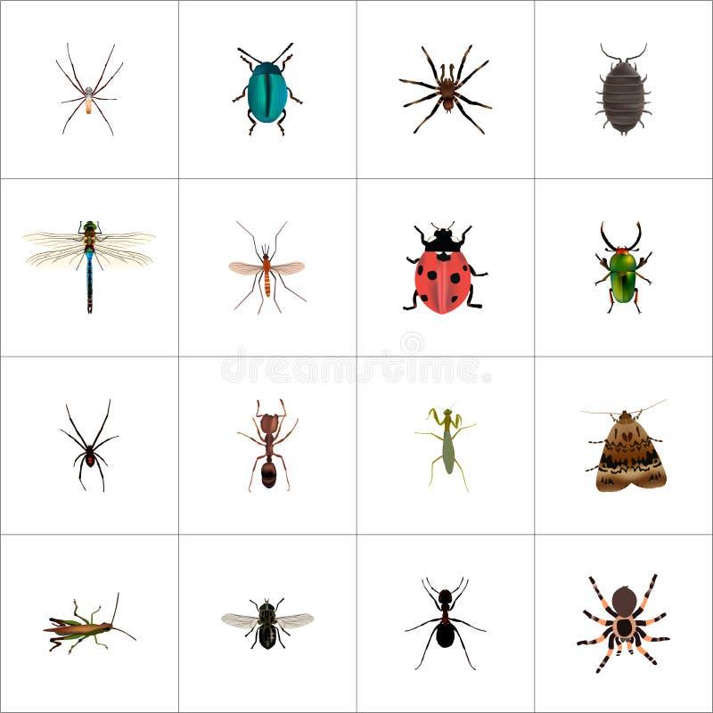 Реалистический паук, красотка, кузнечик и другие элементы вектора Комплект символов насекомого реалистических также включает иллюстрация штока